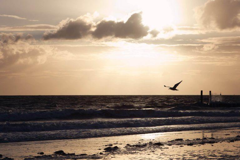 Foto strand van zee en vogel